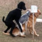 Owners had to peel dogs off one another at the dog park